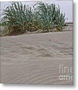 Dune Grass On Beach Dune Landscape Art Prints Metal Print