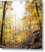 Dune Land Forest Metal Print