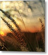 Dune Metal Print by Laura Fasulo