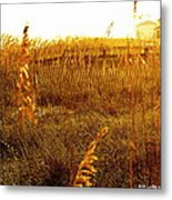 Dunes And Seaoats  Metal Print