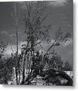 Dunes Tree Bw Metal Print