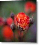 Dusk Romantic Rose Metal Print