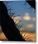 Dusk Settles On A Desert Cholla Cactus Metal Print