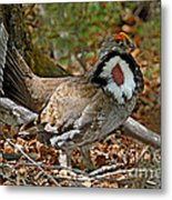 Dusky Grouse Cock Metal Print