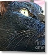 Dusty Black Cat Metal Print