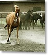 Dusty Paddock Metal Print
