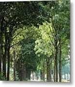 Dutch Landscape - Country Road Metal Print by Carol Groenen