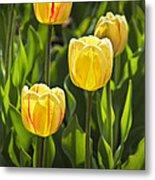 Dutch Yellow Tulip Flowers On Windmill Island In Holland Michigan Metal Print