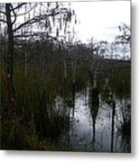 Dwarf Cypress Pool Metal Print