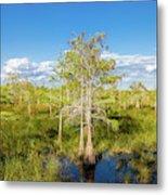 Dwarf Cypress Trees In A Field Metal Print