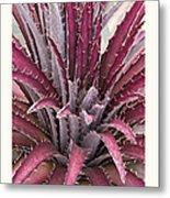 Dyckia 'jim's Red' Metal Print by Saxon Holt