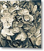Dying Beauty Black And White Metal Print