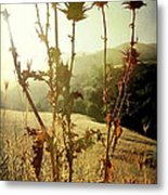 Each New Day Is A Gift Metal Print