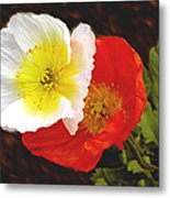 Eager Poppies Metal Print