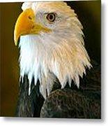 Eagle 3 Metal Print