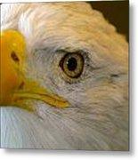 Eagle 6 Metal Print