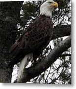 Eagle 9786 Metal Print