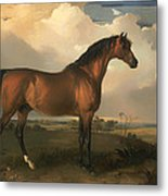 Eagle - A Celebrated Stallion Metal Print