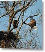 Eagle And The Fish 2 Metal Print
