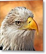 Eagle At Sunset Metal Print