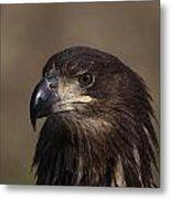 Eagle Beauty Metal Print
