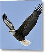 Eagle Class Metal Print by RJ Martens