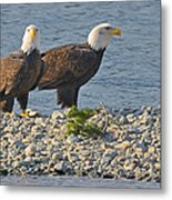 Eagle Couple Metal Print