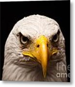 Eagle Eyed Metal Print