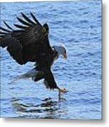 Eagle Grab Metal Print