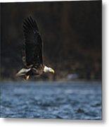 Eagle Ice Glide Metal Print