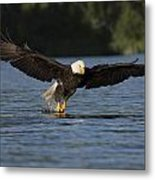 Eagle In Action Series Metal Print