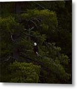 Eagle In The Green Metal Print