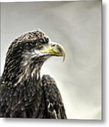 Eagle In The Mist Metal Print