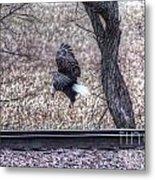 Eagle Landing 2 Metal Print