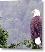 Eagle Looking For Breakfast On A Misty Morning Metal Print