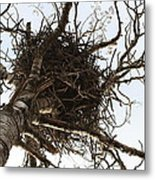 Eagle Nest Metal Print