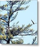Eagle Nest Metal Print