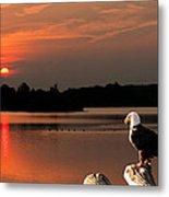 Eagle On Stump Overlooking Water At Sundown Metal Print