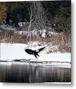 Eagle On The Shoreline Metal Print
