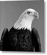 Eagle On Watch Black And White Metal Print