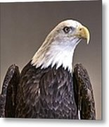 Eagle On Watch Metal Print