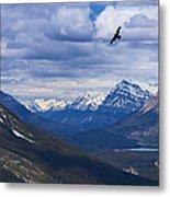 Eagle Over Peyto Lake Metal Print