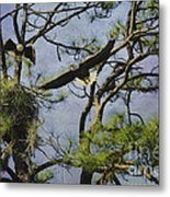Eagle Pair And Nest Metal Print