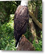 Eagle Portrait Metal Print