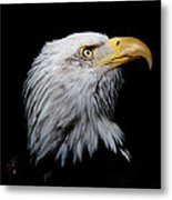 Eagle Portrait II Metal Print