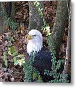 Eagle Pose Metal Print