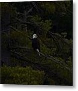 Eagle Splendor Metal Print