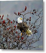 Eagle Tree Metal Print