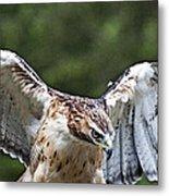 Eagle Wings Metal Print