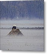 Eagles On Foggy Morning Metal Print